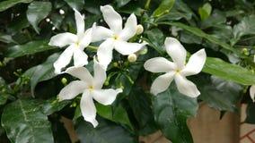 Flores blancas y vida verde fotografía de archivo libre de regalías