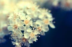 Flores blancos Foto de archivo