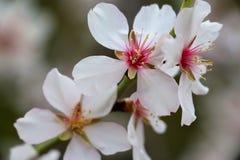 Flores blancos Fotografía de archivo libre de regalías