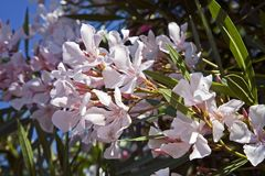 Flores blancos hermosos foto de archivo libre de regalías