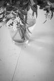 Flores blancos y negros Foto de archivo