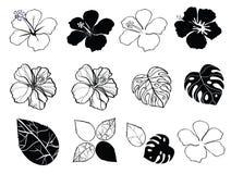 Flores blancos y negros de hibiscos Imagenes de archivo