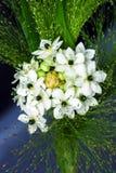 Flores blancos y negros del primer, la respiración del bebé en el fondo oscuro Foto de archivo libre de regalías