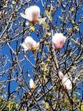 Flores bonitas Fotos de archivo