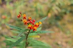 Flores bonitas Foto de archivo libre de regalías