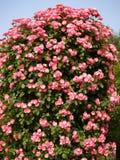 Flores bonitas Fotos de Stock
