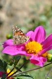 Flores bonitas Imagem de Stock