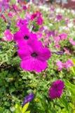 Flores bonitas Foto de Stock