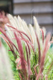 - Flores bonitas fotos de stock royalty free
