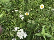 Flores bonitas Fotografía de archivo libre de regalías