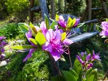 Flores bonitas fotos de archivo libres de regalías