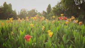 Flores bonitas Fotografia de Stock