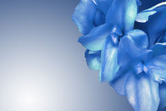 Flores bonitas azuis Fotografia de Stock Royalty Free