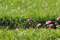 Flores bonitas com bavkground da grama fotos de stock