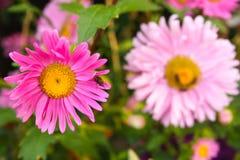 Flores bonitas com moscas fotografia de stock royalty free