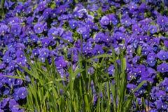 Flores bonitas como um fundo fotografia de stock