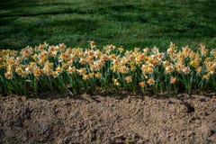 Flores bonitas como um fundo foto de stock royalty free