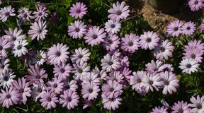 Flores bonitas como um fundo imagens de stock