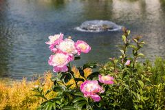Flores bonitas como um fundo fotos de stock royalty free