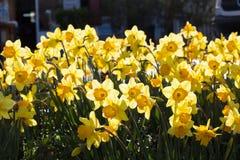 Flores bonitas como um fundo fotografia de stock royalty free