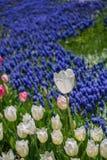 Flores bonitas como um fundo imagem de stock