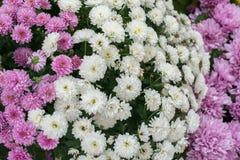 Flores bonitas como um fundo foto de stock