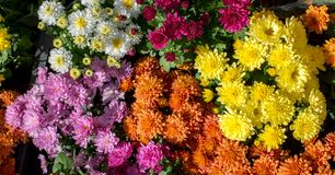 Flores bonitas como um fundo fotos de stock