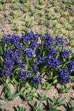 Flores bonitas como um fundo imagem de stock royalty free