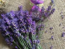 Flores bonitas da alfazema Fotos de Stock