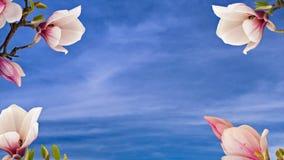 Flores bonitas da magnólia fotos de stock royalty free