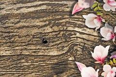 Flores bonitas da magnólia Imagens de Stock