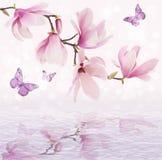 Flores bonitas da magnólia refletidas na água Fotografia de Stock