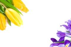 Flores bonitas da mola Foto de Stock