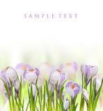 Flores bonitas da mola Fotos de Stock Royalty Free