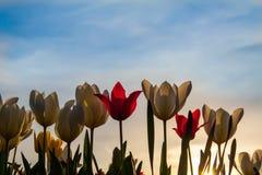 Flores bonitas da mola fotografia de stock royalty free