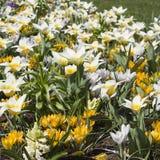 Flores bonitas da mola Imagens de Stock