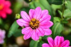 Flores bonitas da mola Imagem de Stock Royalty Free