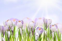 Flores bonitas da mola imagem de stock