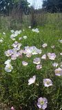 Flores bonitas da mola! Fotografia de Stock