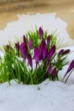 Flores bonitas da mola da arte Foto de Stock