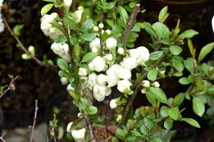 Flores bonitas da mola em domingo Imagens de Stock Royalty Free