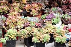 Flores bonitas da mola em domingo Imagem de Stock