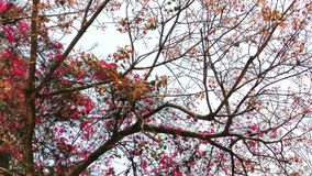 Flores bonitas da mola na natureza Fotografia de Stock Royalty Free