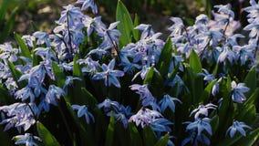 Flores bonitas da mola no close up do jardim vídeos de arquivo