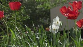 Flores bonitas da mola no close up do jardim video estoque