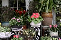 Flores bonitas da mola no vaso de flores Imagens de Stock