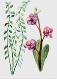 Flores bonitas da vida ilustração royalty free