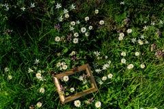 Flores bonitas de florescência no quadro de madeira imagens de stock