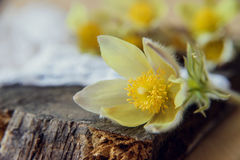 Flores bonitas 8 de março cartão do dia das mulheres Snowdrops do ramalhete no fundo de madeira Imagens de Stock
