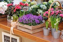 Flores bonitas diferentes em umas caixas de madeira e em uns potenciômetros de flor Fotografia de Stock Royalty Free